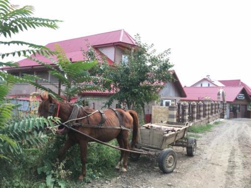 28 moderne daken en vervoer per paardenkar